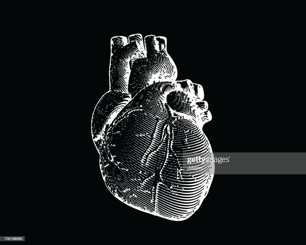 Engraving human heart illustration isolated on black BG