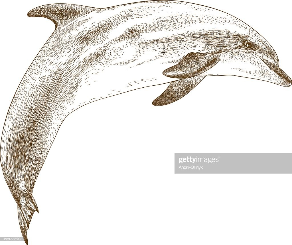 engraving illustration of dolphin
