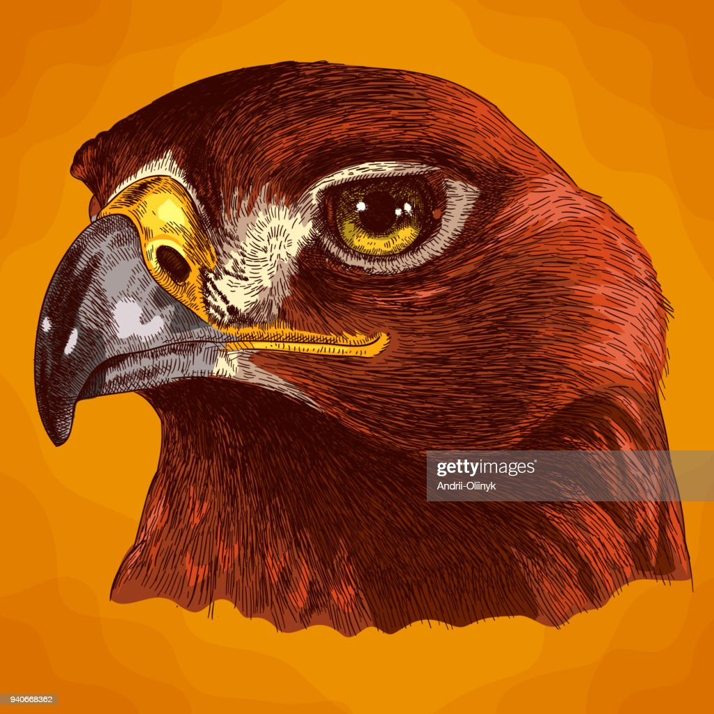 engraving illustration of eagle head