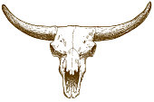 engraving illustration of steppe bison skull