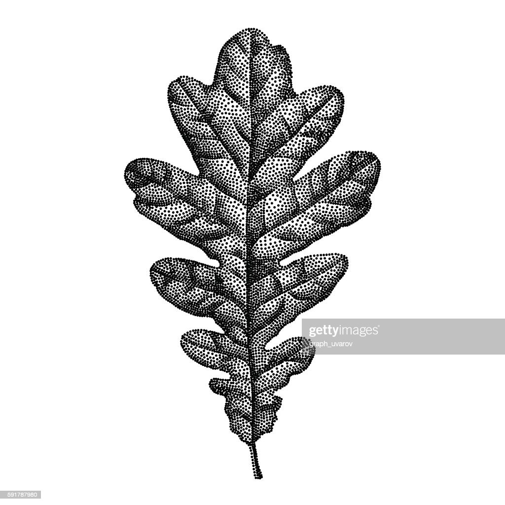 Engraving Oak Leaf Hand Drawn Vector Illustration