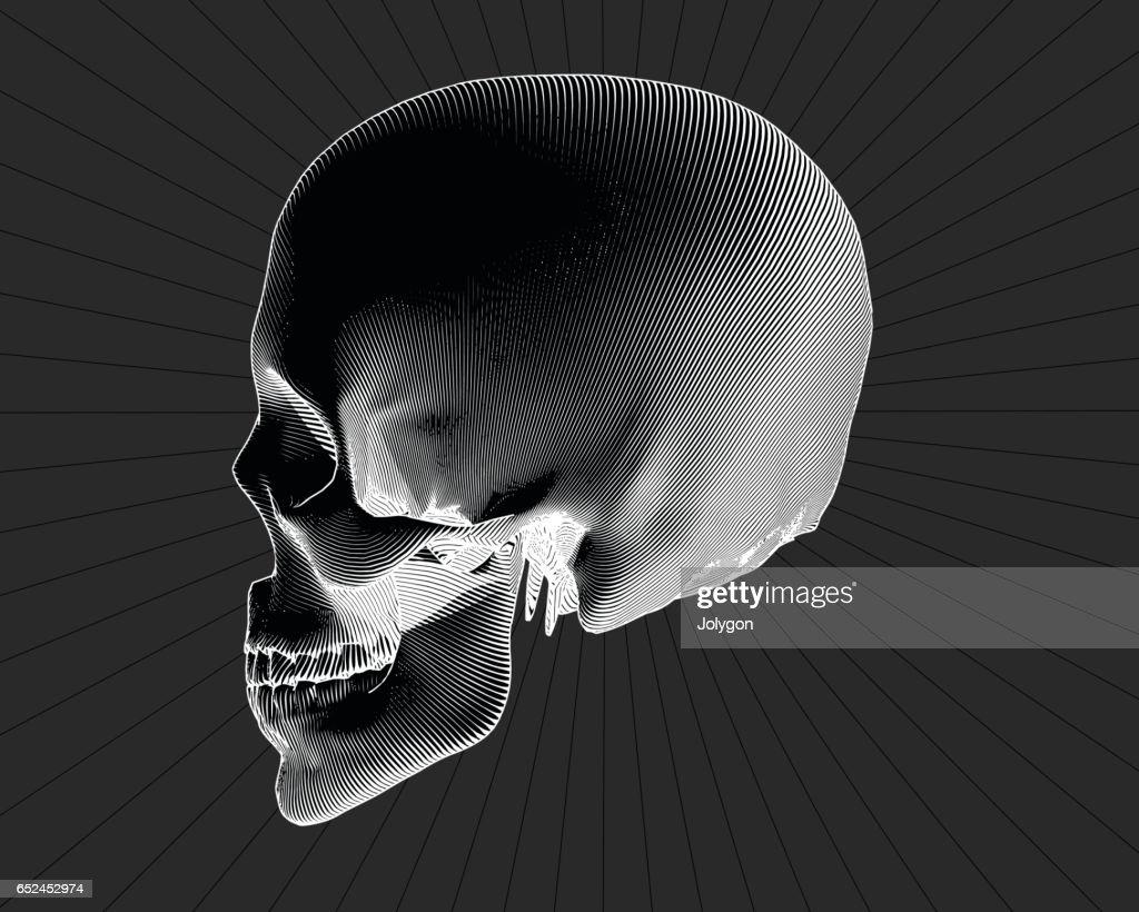 Engraving side view skull on gray BG