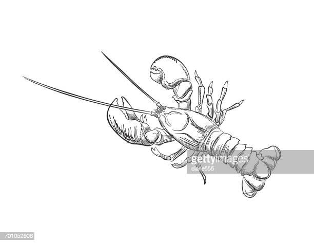 Engraving Style Marine and Nautical Element - Lobster