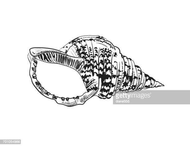 Marine und nautischen Stilelement - Triton Shell Gravur