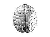 Engraving top view brain illustration on white BG