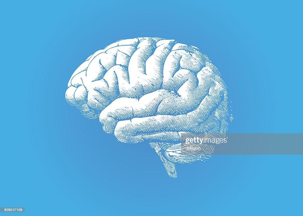 Engraving white brain on blue BG : stock illustration