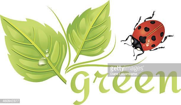 illustrations, cliparts, dessins animés et icônes de icône de l'environnement et recyclage feuilles et coccinelle - coccinelle