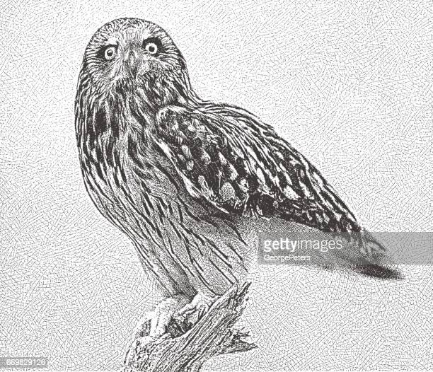 Etching of a Short Eared Owl