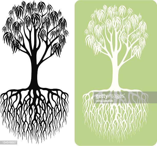 eucalyptus tree silhouette - eucalyptus tree stock illustrations