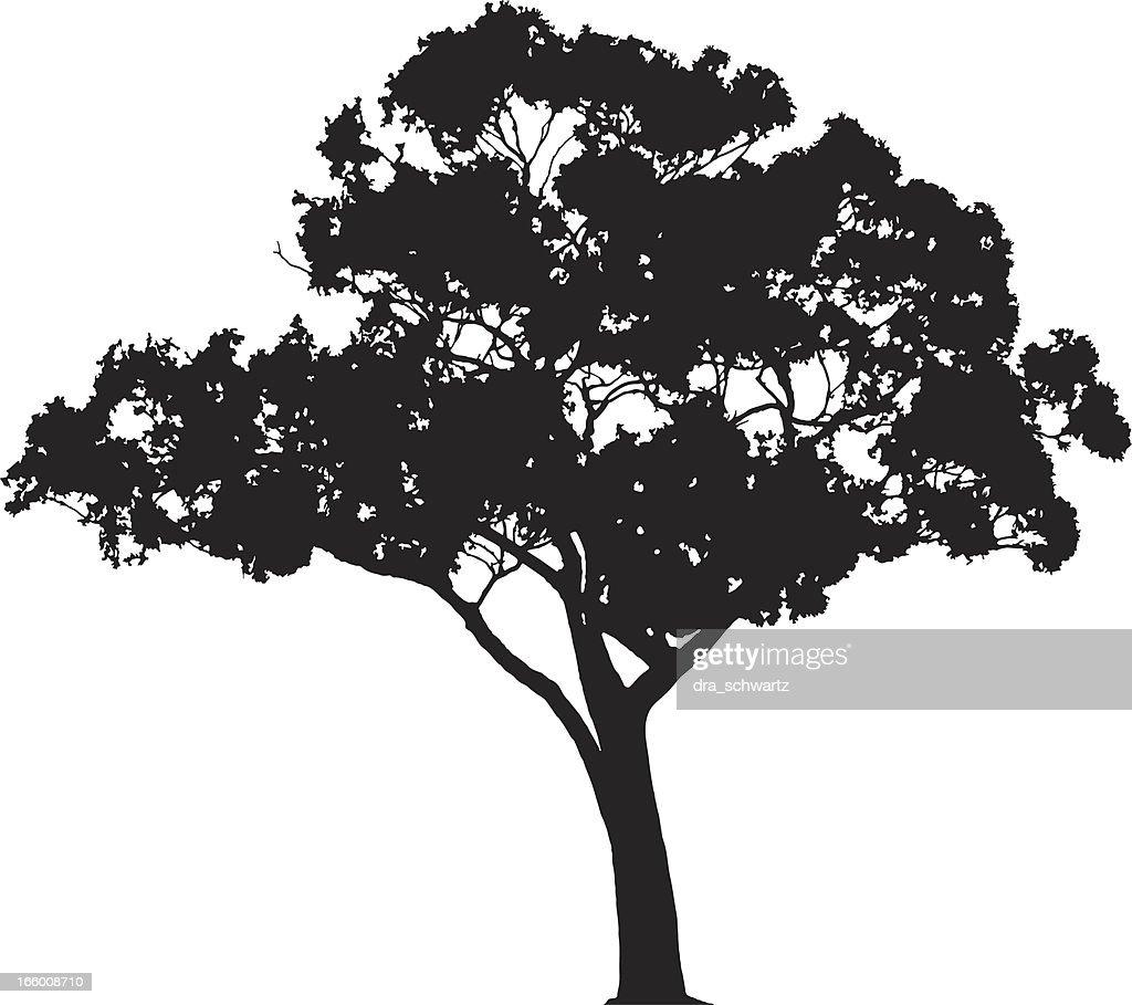 Vector Illustration Tree: Eucalyptus Tree Silhouette Vector Vector Art