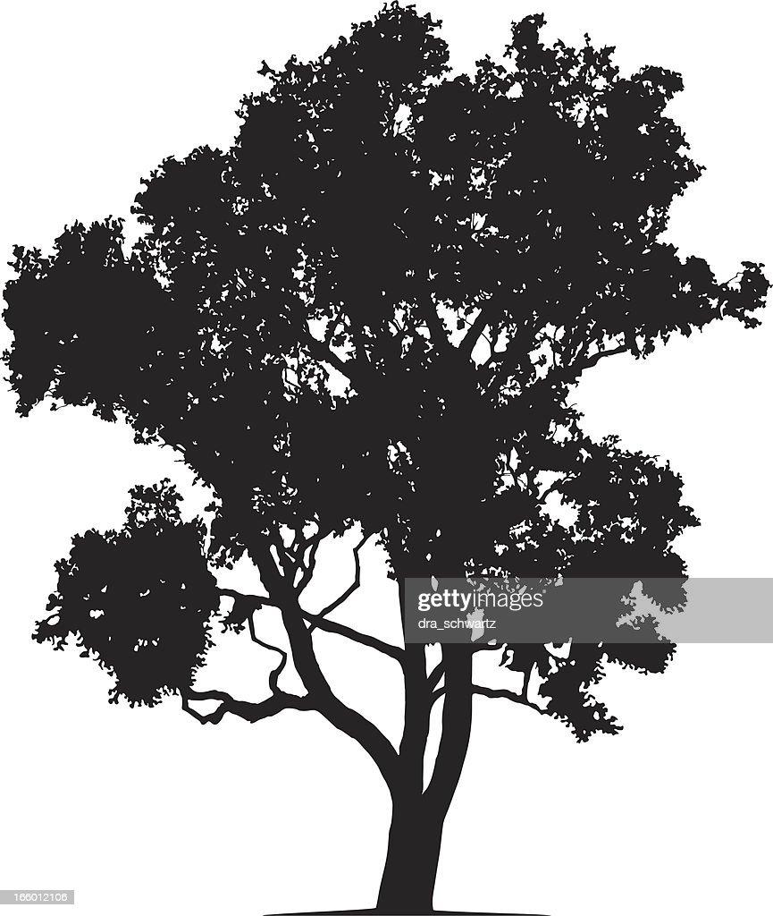 Eucalyptus tree silhouette, Vector