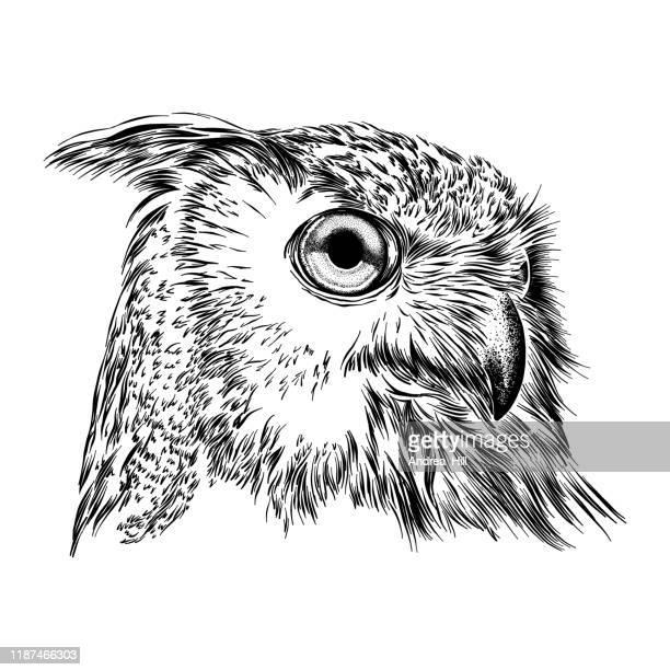 illustrations, cliparts, dessins animés et icônes de illustration eurasienne de visage d'aigle de hibou - hibou grand duc