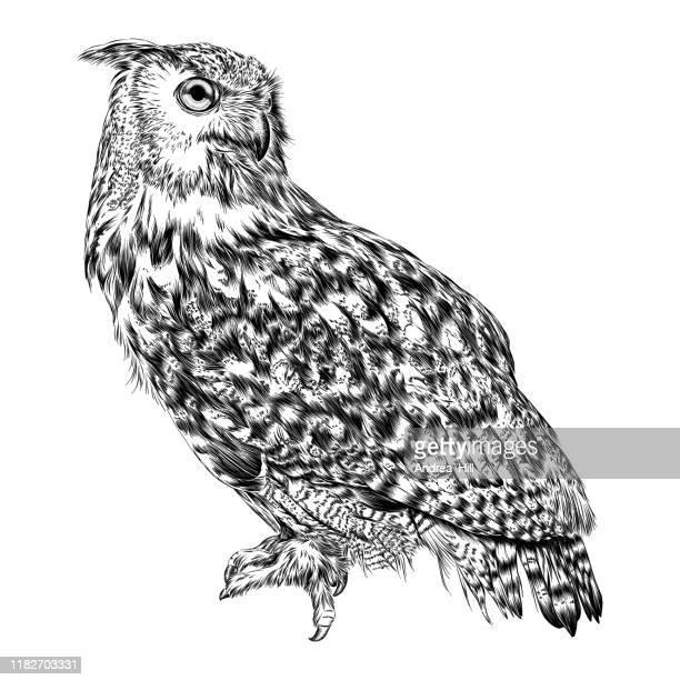 illustrations, cliparts, dessins animés et icônes de illustration eurasienne de dessin d'encre d'aigle de dessin - chouette