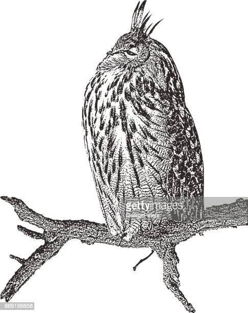 Eurasian Eagle Owl perched on a branch