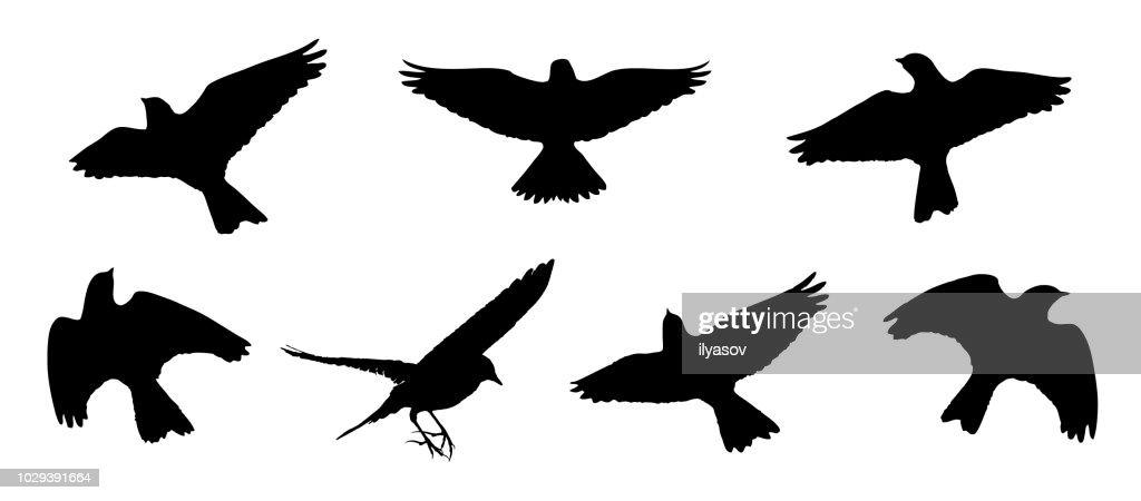 Eurasian skylark in the flight silhouettes set