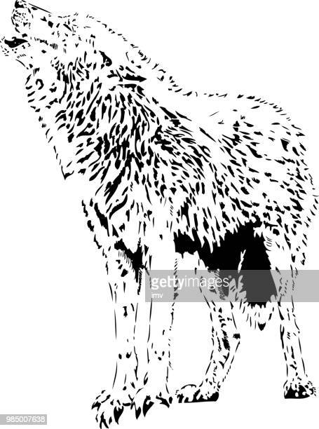 eurasian wolf howling - iberian peninsula stock illustrations, clip art, cartoons, & icons