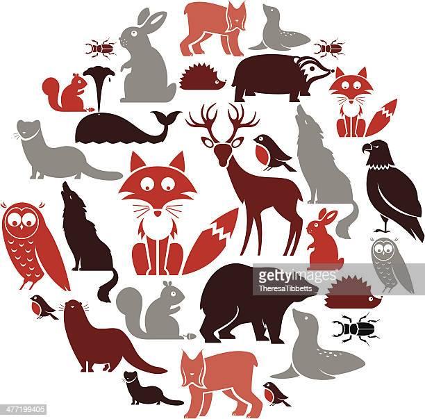 european animal icon set - squirrel stock illustrations