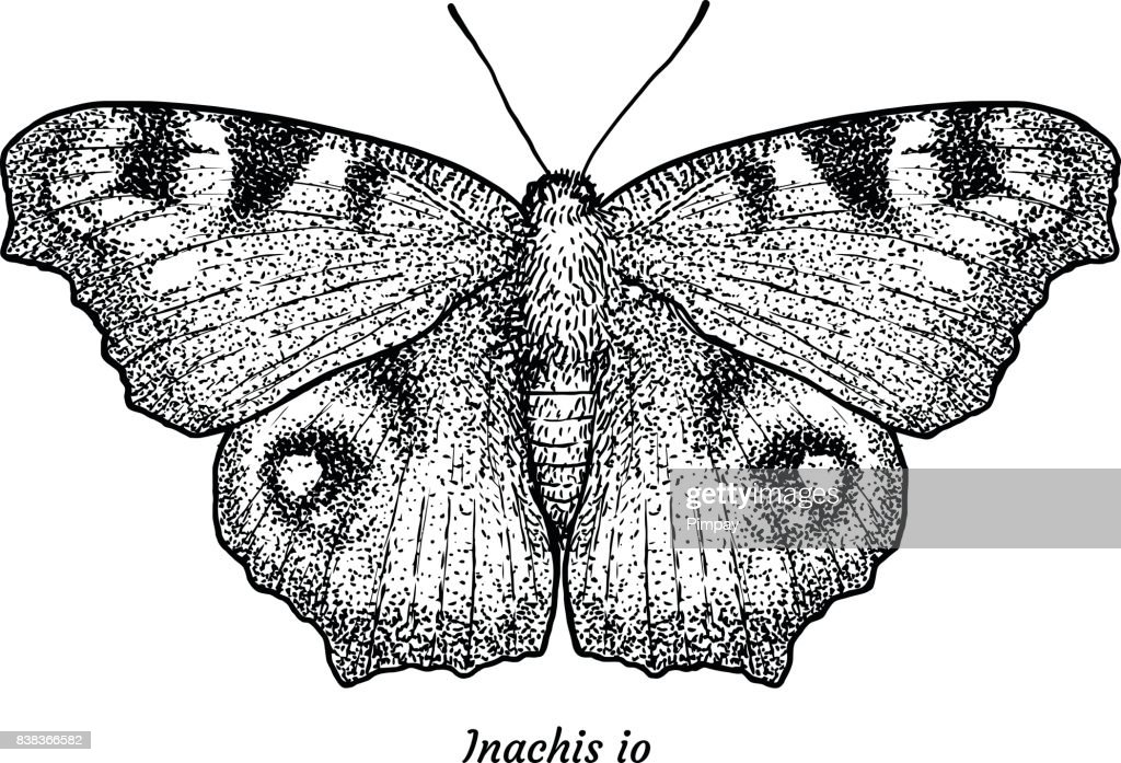 European, peacock butterfly illustration, drawing, engraving, ink, line art, vector