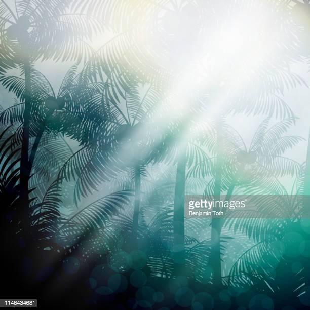 ilustraciones, imágenes clip art, dibujos animados e iconos de stock de noche en bosque tropical selva de fondo - hoja de palmera