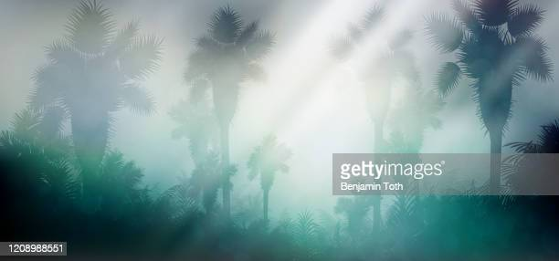 evening in tropical rainforest jungle background - tropical tree stock illustrations