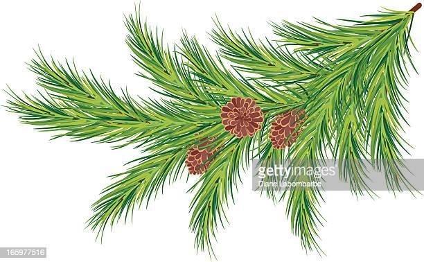 stockillustraties, clipart, cartoons en iconen met evergreen branch with pine cones - twijg