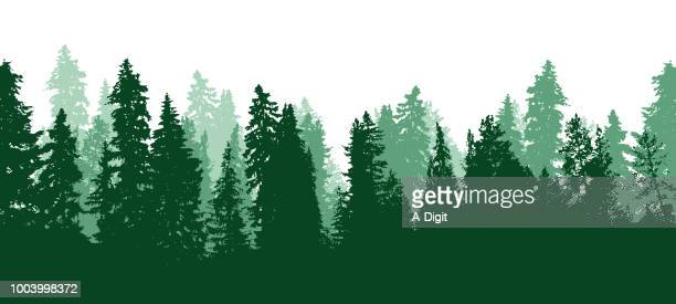 Evergreen Forest Trees