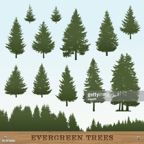 Evergreen Tree Silhouettes