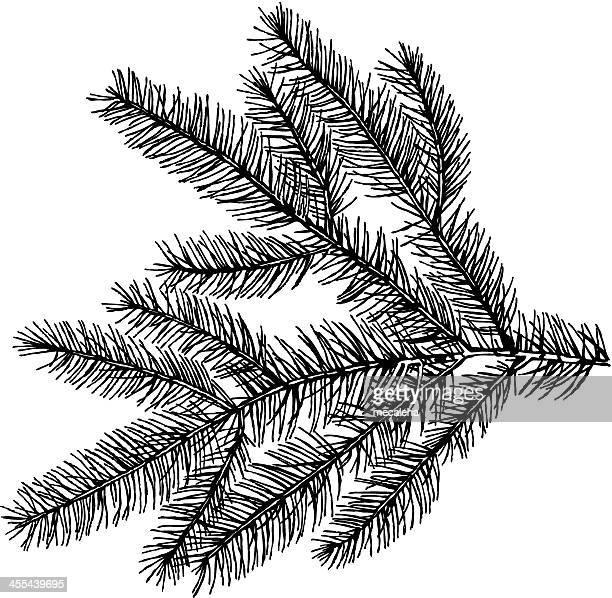 evergreens - cypress tree stock illustrations