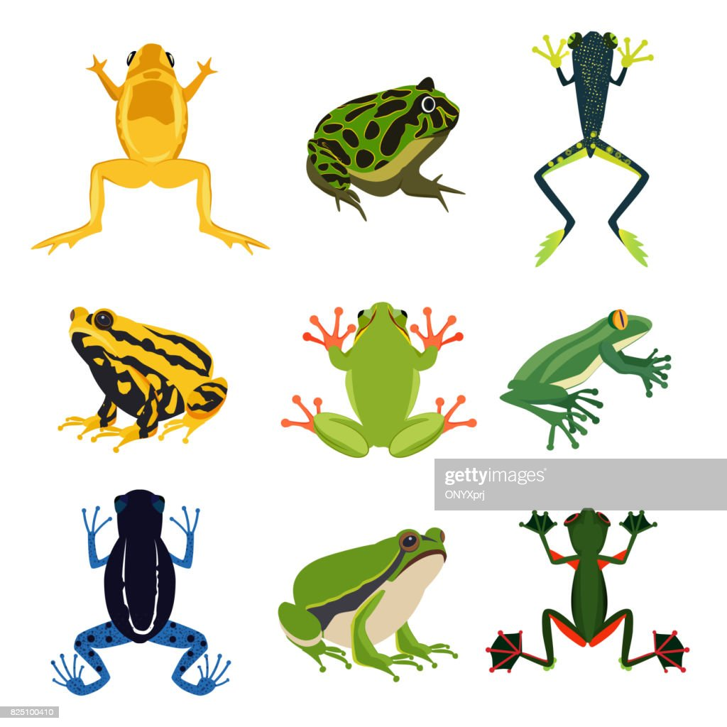 Exotic amphibian set. Different frogs in cartoon style. Green animals isolate on white