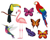 exotic and tropical birds and butterflies