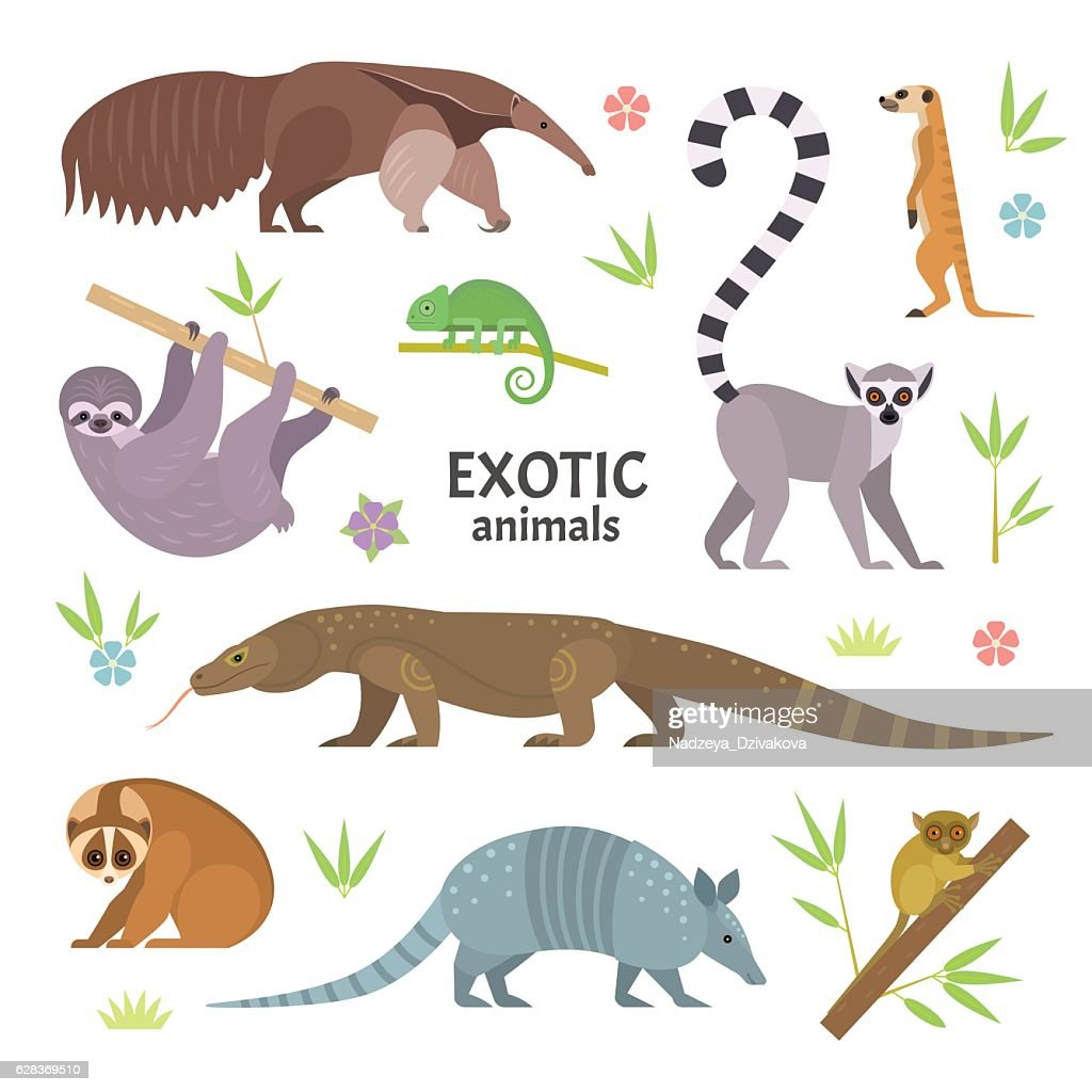 Exotic animals.