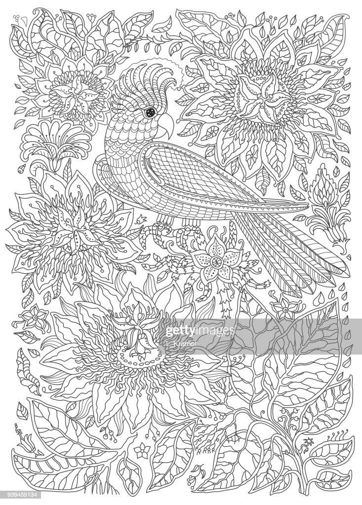 Kleurplaten Volwassenen Papegaai.Exotische Vogels Fantastische Bloemen Takken Bladeren Contour Dunne