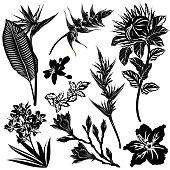 Exotic flowers silhouettes (strelitzia, heliconia, protea, oleander, hibiscus, mandarin, magnolia). Set of vector illustrations.