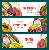 Exotic fruit sketch banner set of tropical berry
