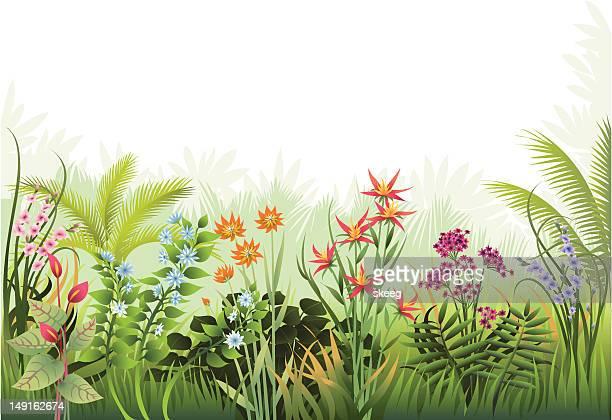 ilustrações, clipart, desenhos animados e ícones de jardim exótico de fronteira - flowerbed