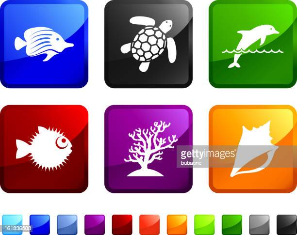 exotic marine wildlife royalty free vector icon set stickers - green turtle stock illustrations, clip art, cartoons, & icons