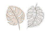 Exotic monstera continuous one line drawing summer tropical leaf hand drawn on white background minimalist design. Monstera leaf Minimal Line Style. Continuous One Line drawing Abstract Vector Tropical Palm Isolated on a White Background. Two leaves on br