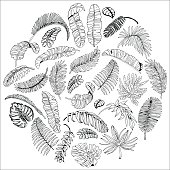 Exotic Palm Leaves in Circle. Tropical Leaves Background. Hand Drawn illustration.