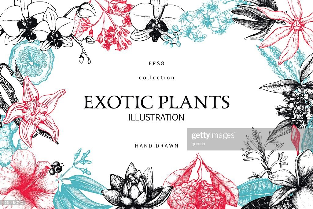 Exotic plants background.
