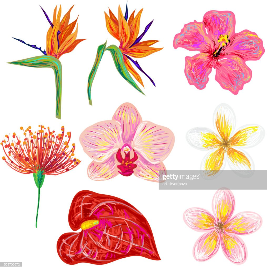 Exotic tropical flowers collection