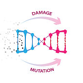 External factors that cause dna damage and mutations