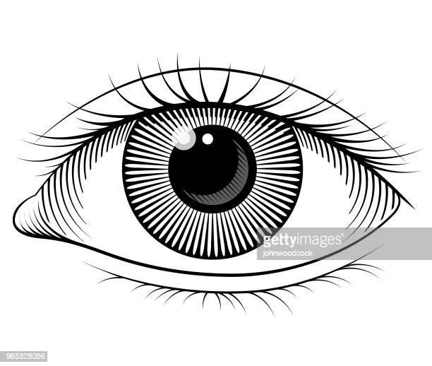 eye vector illustration - human eye stock illustrations