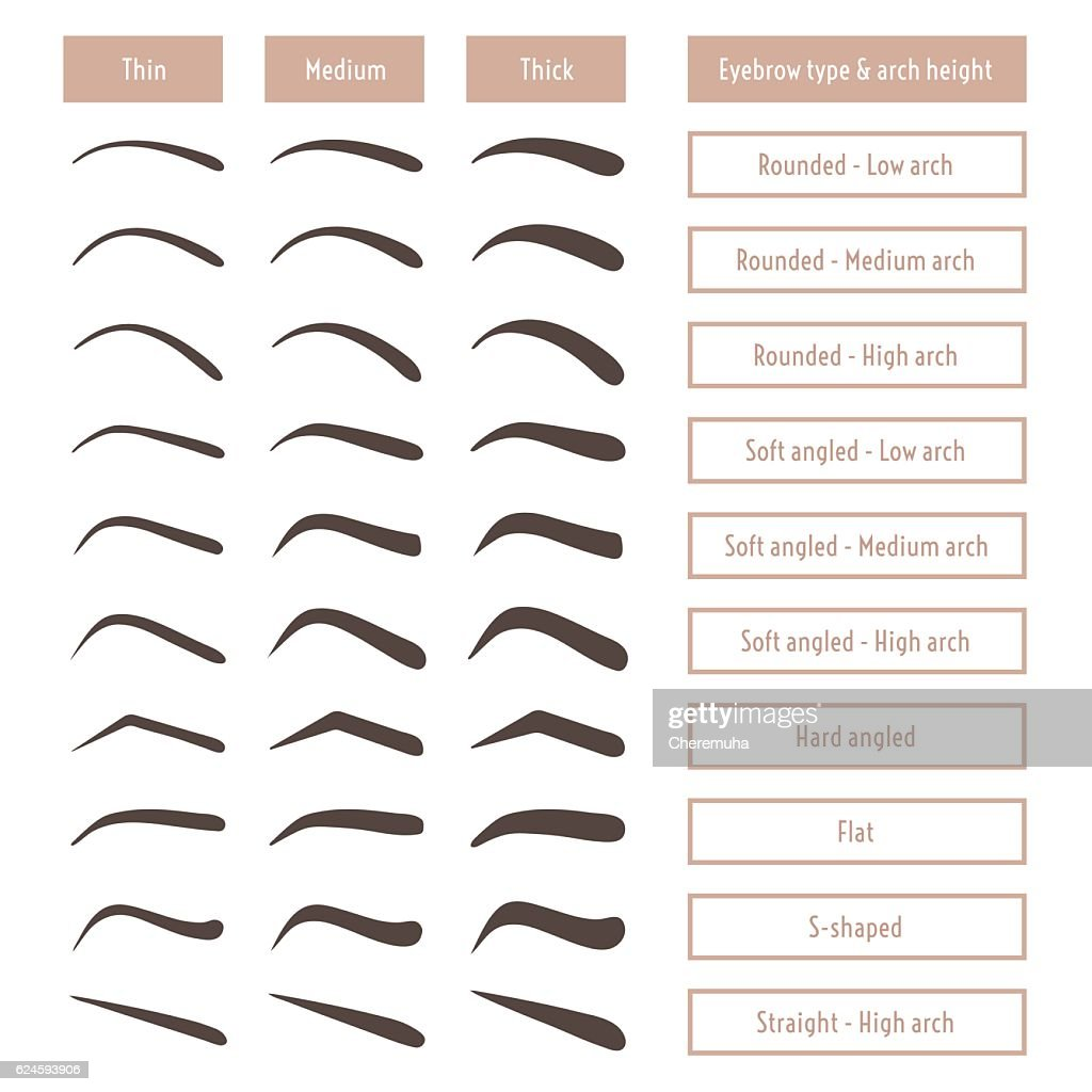 Eyebrow shapes. Various types of eyebrows. Trimming. Vector illustration.