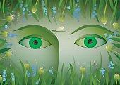 eyes of summer,