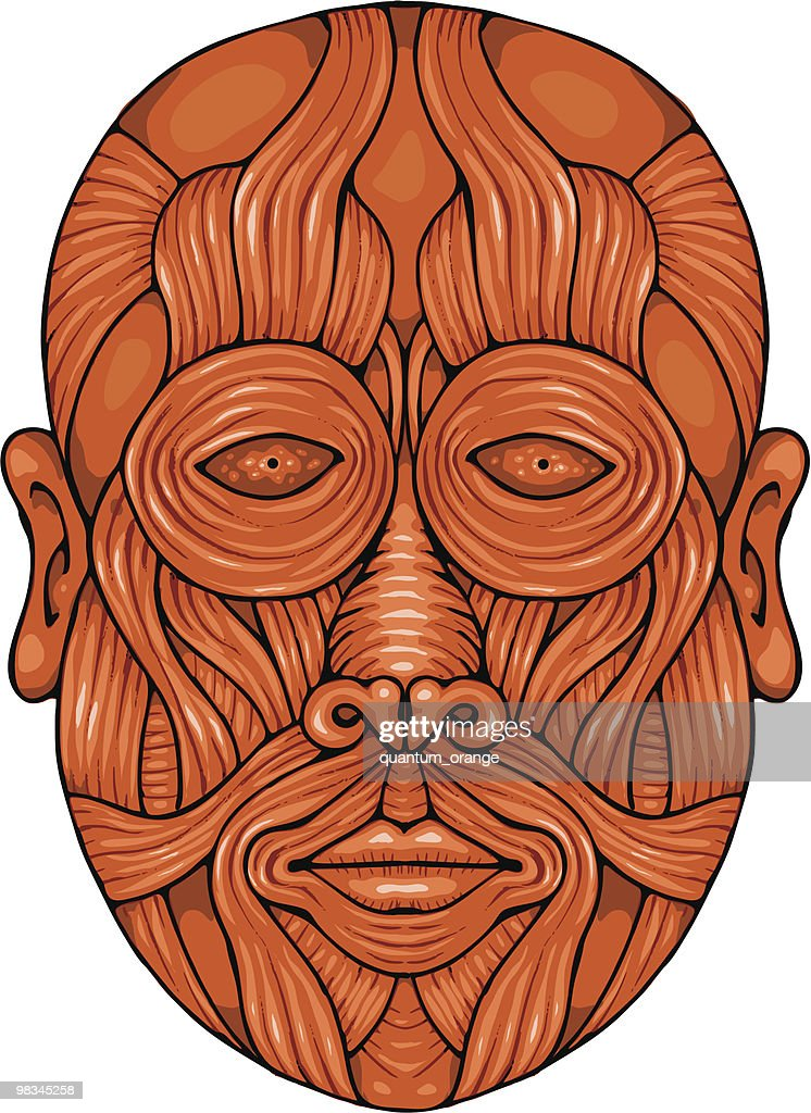 Face Muscles Vector Art | Getty Images