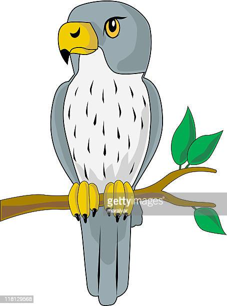 ilustrações de stock, clip art, desenhos animados e ícones de falcon pássaro - falcon bird