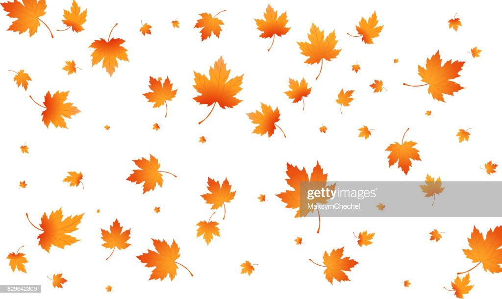 Fall autumn leaves background. Flying maple leaves isolated. Vector autumn background