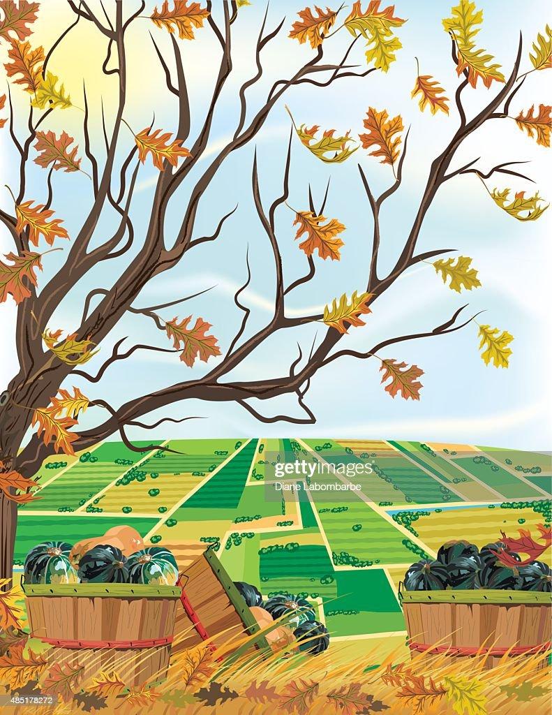 Fall Farm Harvest of Squash Under A Tree