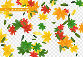 Fall Foliage. Autumn leaves maple