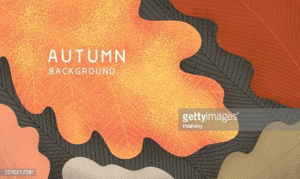 fall leaves background - autumn stock illustrations